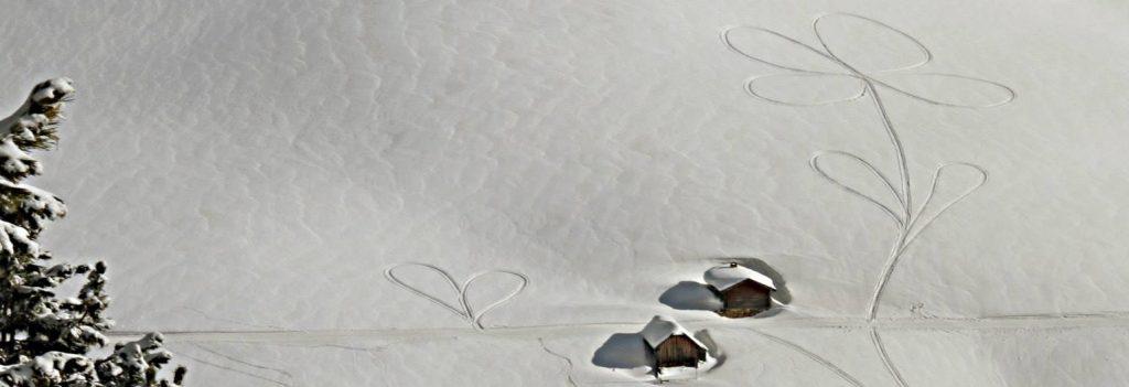 fiori sulla neve pampeago trentino