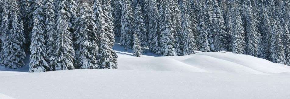 forest with snow trentino